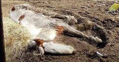 Starved Horse Looked Dead, But Just Wait For Her Amazing Transformation