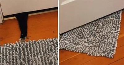 Cat Swipes Rug When Human Didn't Let Him Into Bathroom