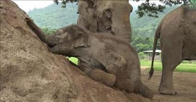 Adorable Baby Elephant Enjoys Playtime in the Sand