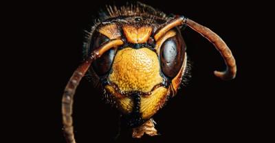a hornet, when bad news becomes good news