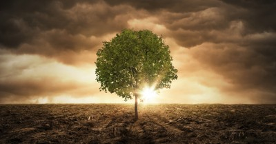 5 Biblical Reasons to Not Be Afraid if We're in the End Times