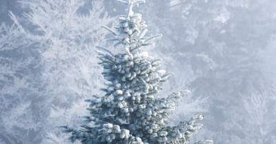 The Ancient Pagan History and Evolving Meaning of the Christmas Tree