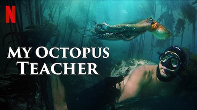 Post for Netflix show My Octopus Teacher