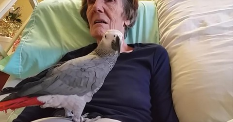 Parrot+And+Dying+Owner+Say+Goodbye+After+25+Years