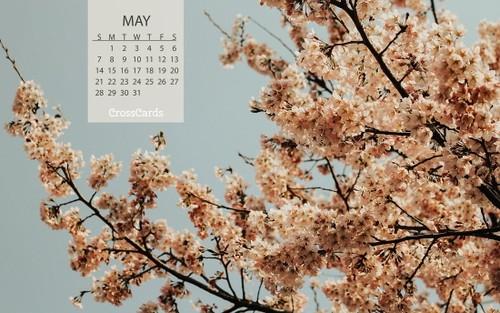 May 2017 - Blooms