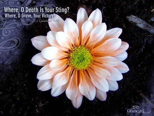 Death's Sting