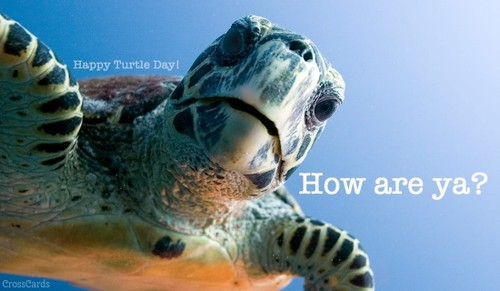 Happy Turtle Day! (5/23)