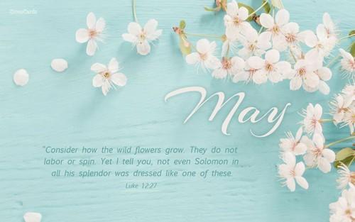 May - Consider How the Wildflowers Grow - Luke 12:27