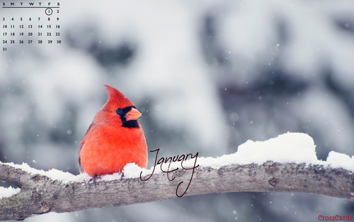 January 2021 - Cardinal in the Snow ecard, online card