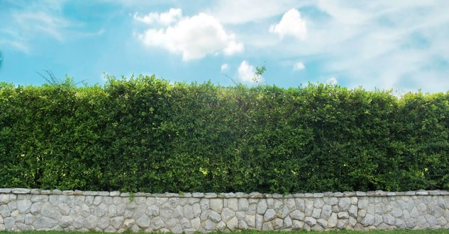 What Exactly Is a 'Hedge of Protection'?