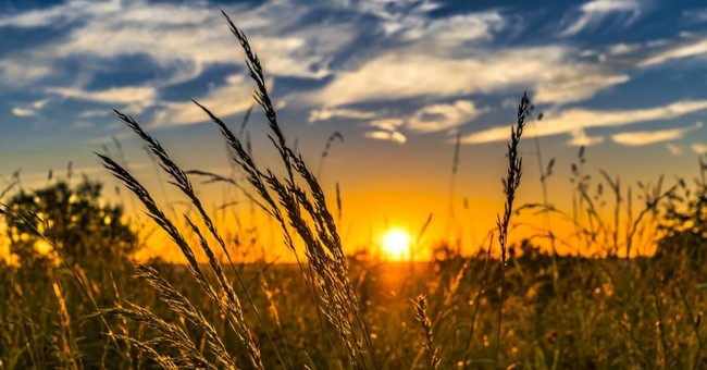 a field during golden hour, a wednesday prayer
