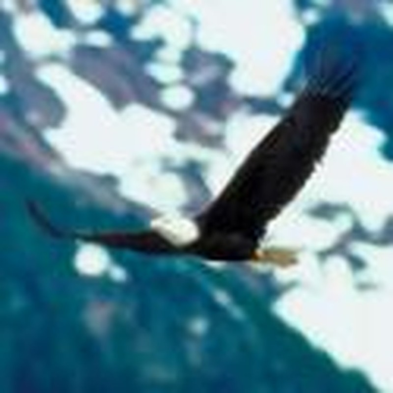 Why Eagles Fly and Chickens Flutter