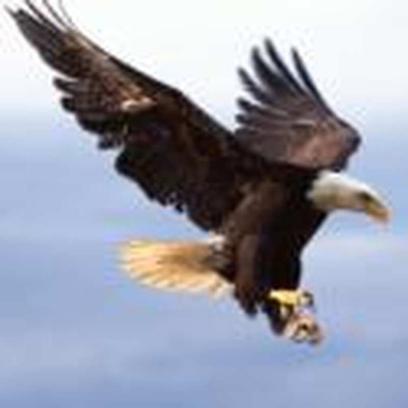 On Eagle's Wings: Can Troubles Really Teach You to Fly?