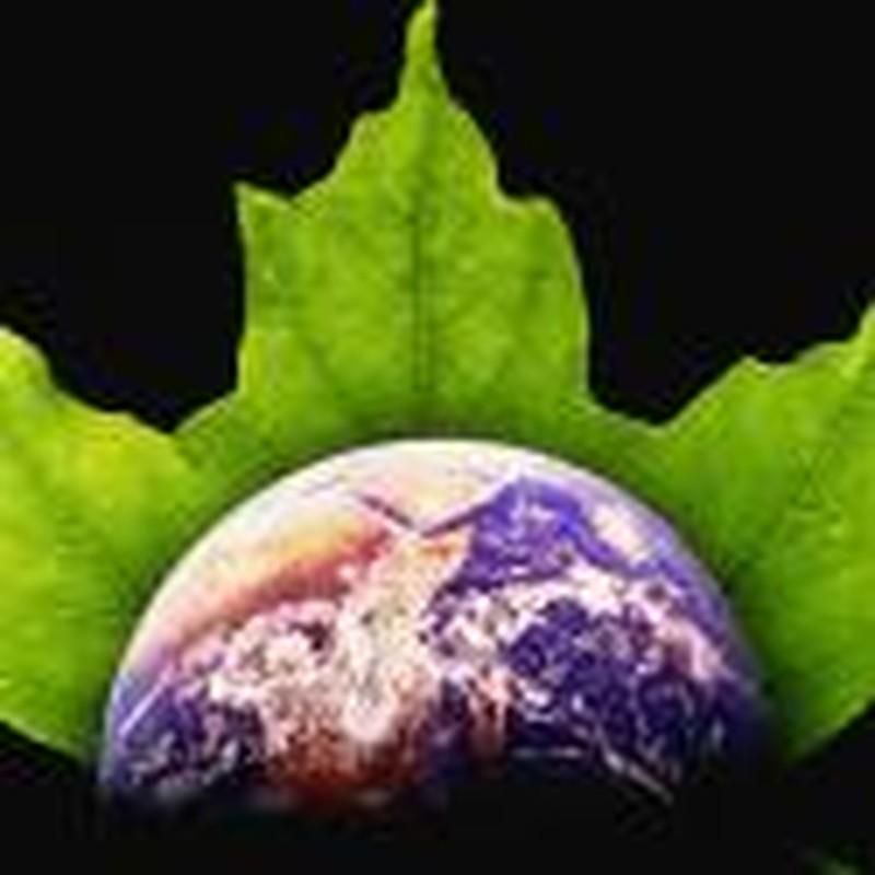 "Responding to ""Green Politics,"" Part Three"