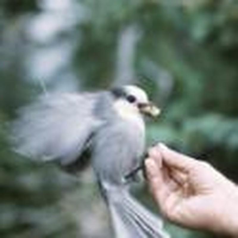 Birds of a Feather: Experiments for Backyard Birdwatchers