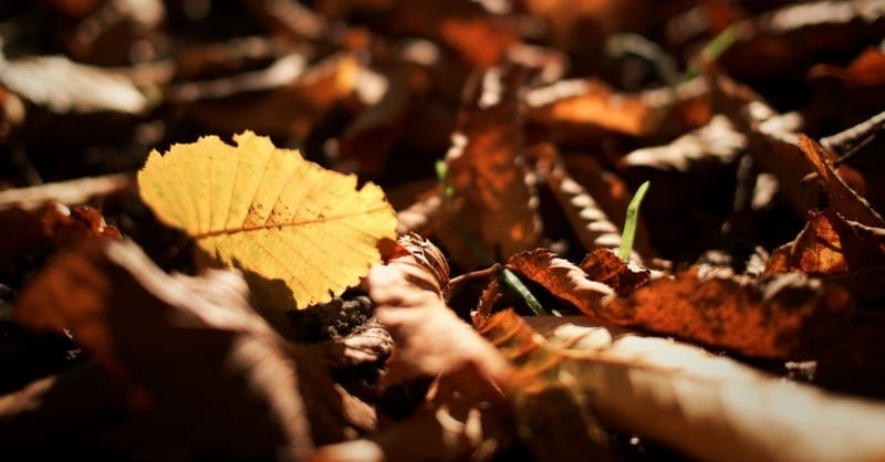 Reflections of Autumn (and its Lone Appearance in the Bible)
