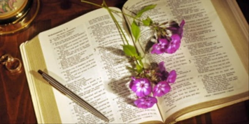 Is There Intended Allegory in the Song of Solomon?