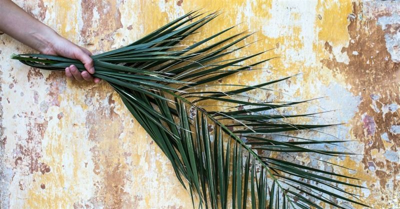 palm branches, Palm Sunday