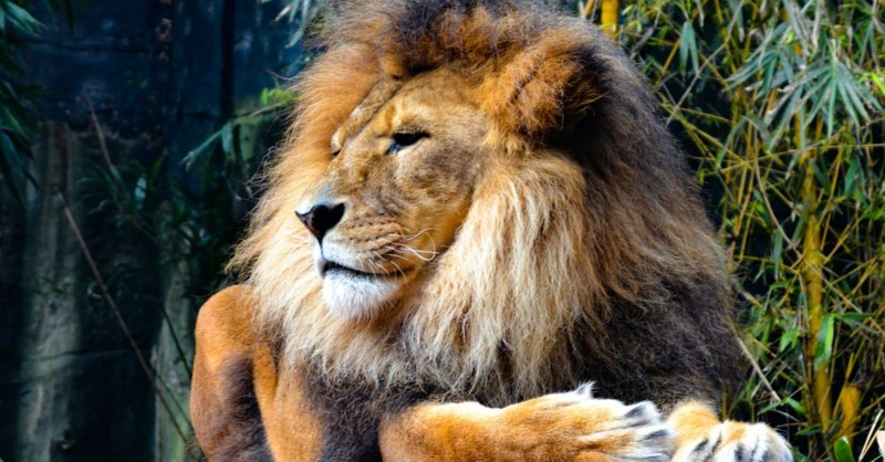 How Is Jesus the 'Lamb of God' and the 'Lion of Judah'?