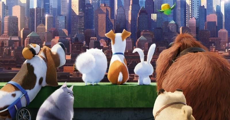 <i>The Secret Life of Pets</i> is for the Birds... and Dogs, and Their Humans