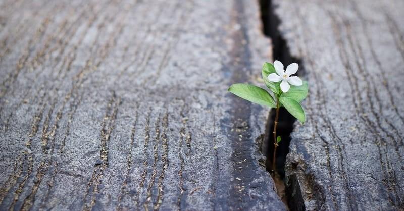 5 Hope-Filled Bible Verses