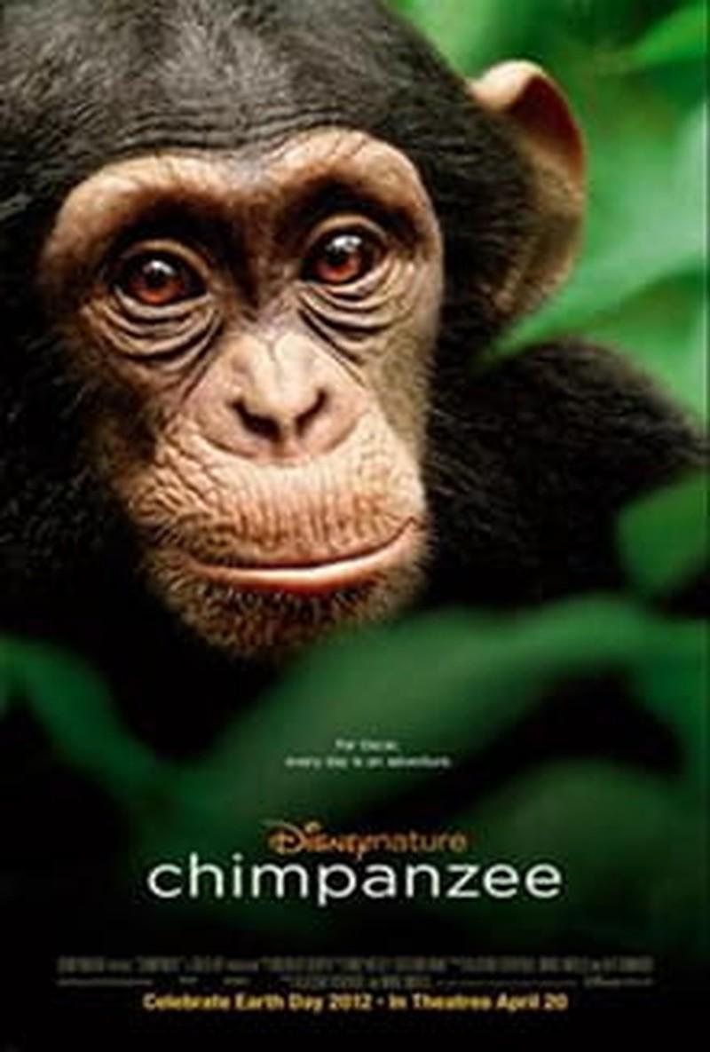 God Writes the Story in <i>Chimpanzee</i>