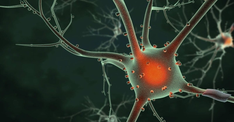When Youth Ministry Meets Neuroscience: Eight Ways Theology and Neuroscience Can Guide Your Ministry to Youth