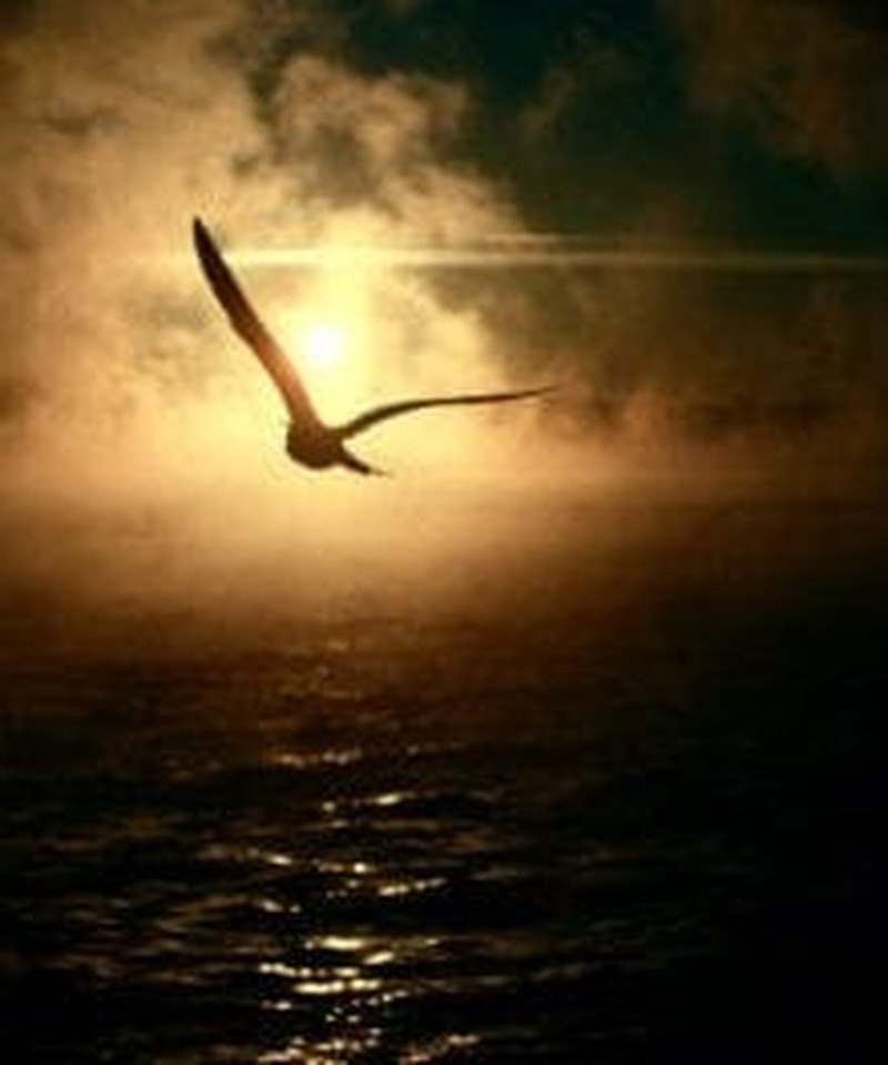 How to Spread Your Spiritual Wings and Fly