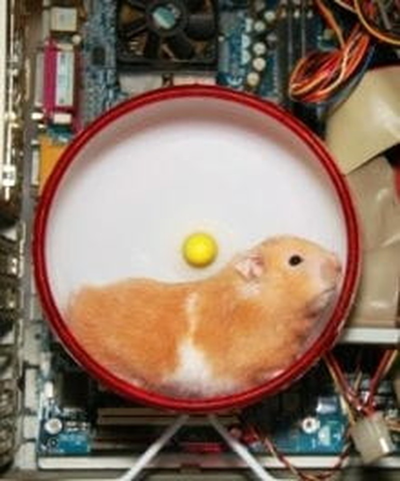 Getting Off the Homeschool Hamster Wheel