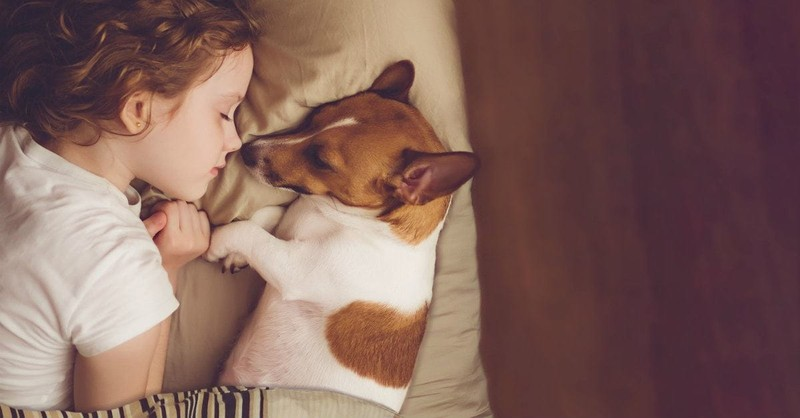 5 Lessons to Teach Children after the Loss of a Pet