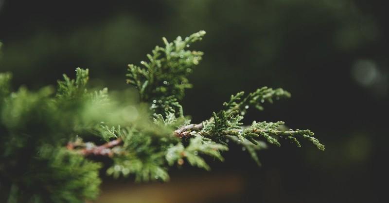 Enjoying God's Presence by Praying His Advent Names