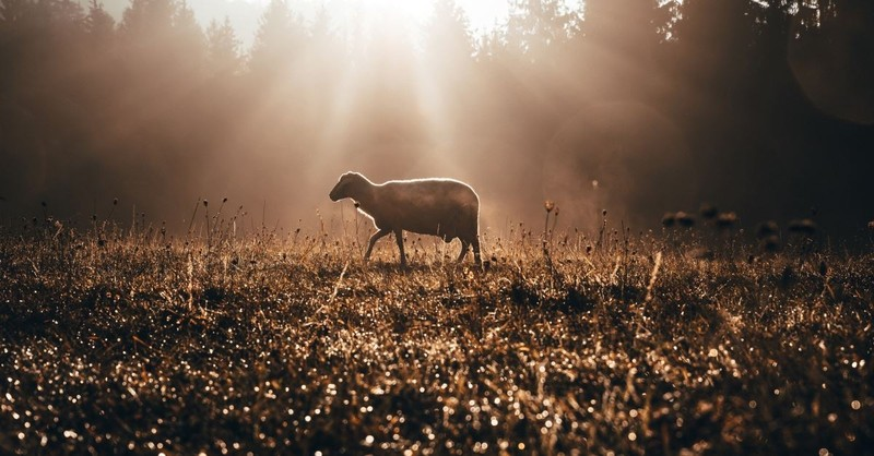7 Questions to Help You Recognize the Voice of the Shepherd