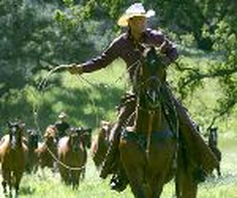 """Wild Horses Can't Stop Tim McGraw's Rise in """"Flicka"""""""