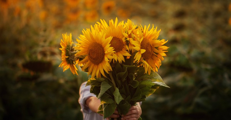 person holding out huge bouquet of sunflowers outside, it is better to give than receive