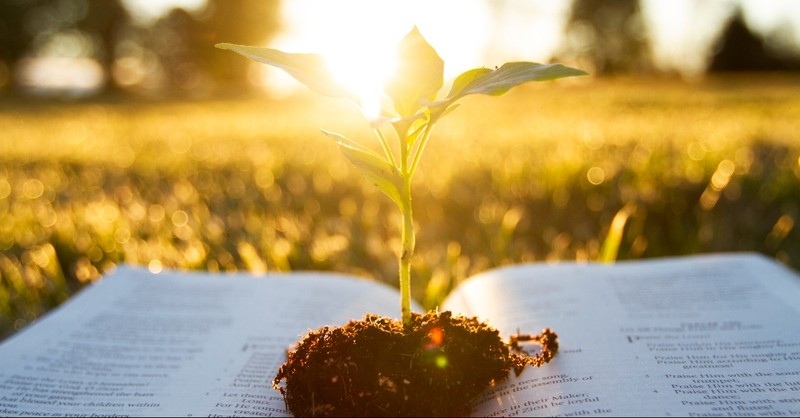 Plant growing out of the Bible