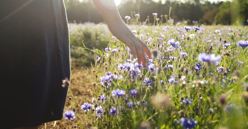 outdoor nature scene of womans hand trailing over wildflowers