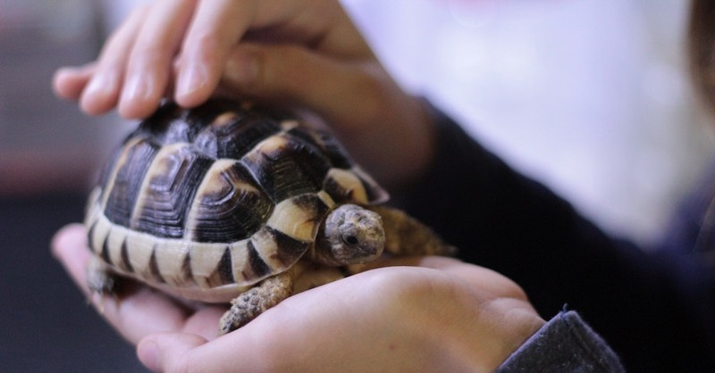 person holding small turtle in hands