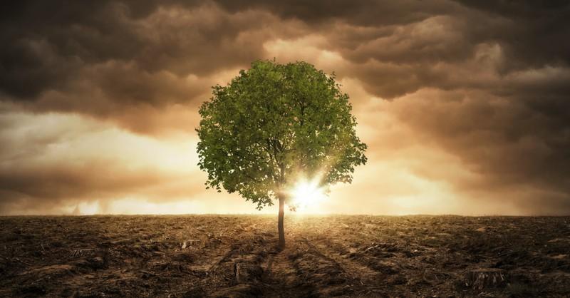 single tree at peace in end times  barren landscape sun bursting through