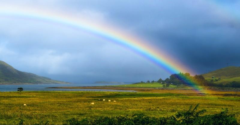 Rainbow over a field