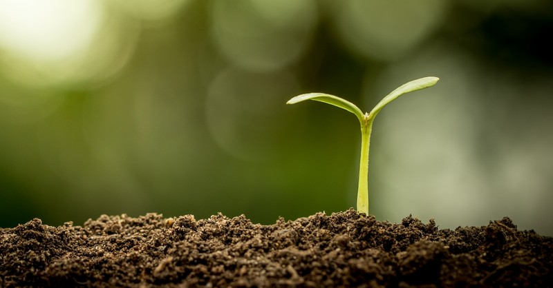 seedling sprouting from soil Parable of the Sower