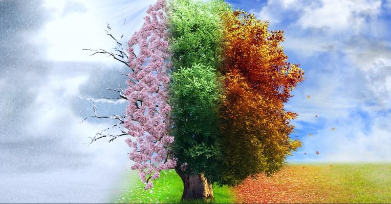 All season on a tree