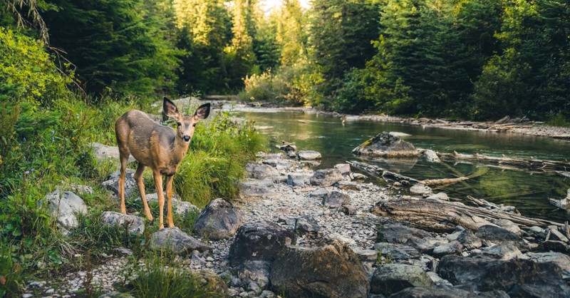deer in beautiful nature landscape by river - Genesis 1 creation story