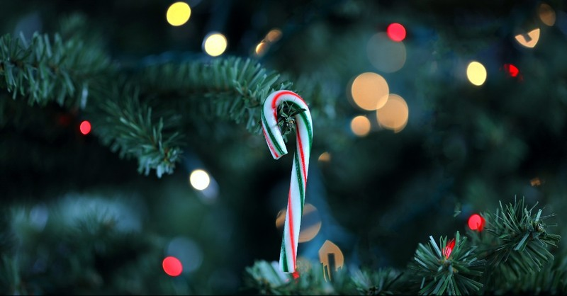 Candy cane hanging on a Christmas Tree