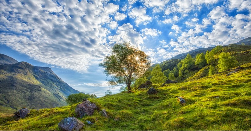 Landscape of a mountain and tree
