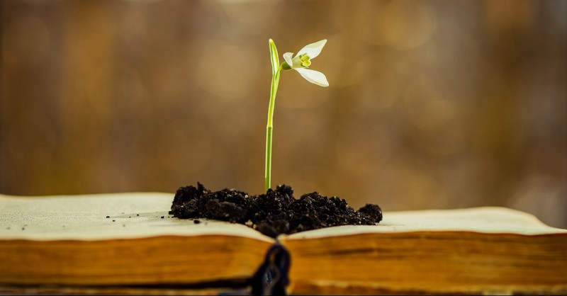 Flower growing out of the Bible