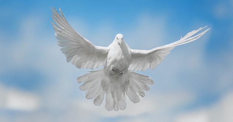 dove flying, what is pentecost