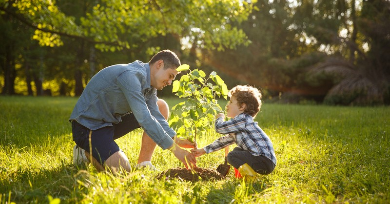 father and son planting tree outside in yard, what is stewardship