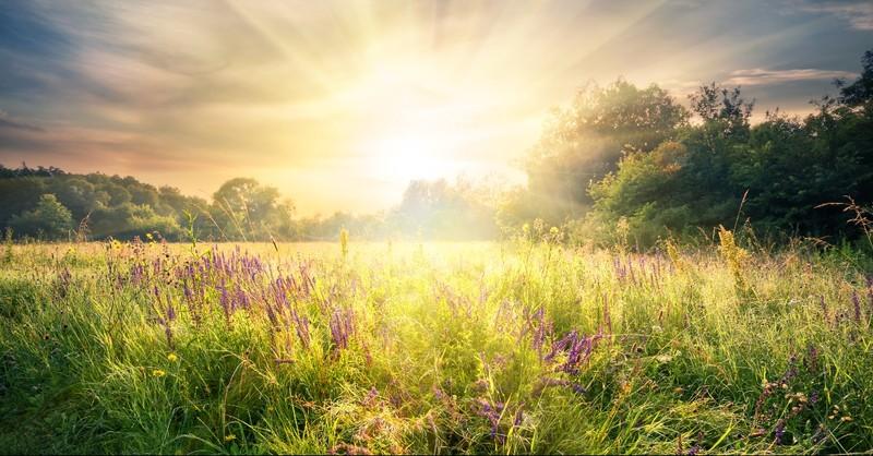 Sun rising over a field of purple heather