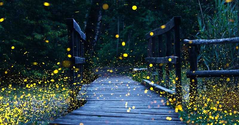 Fireflies flying over a wooden path