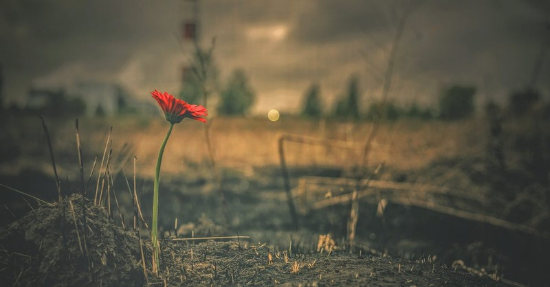 Desolate land with sing red flower